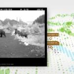 Webdoku: Bear 71